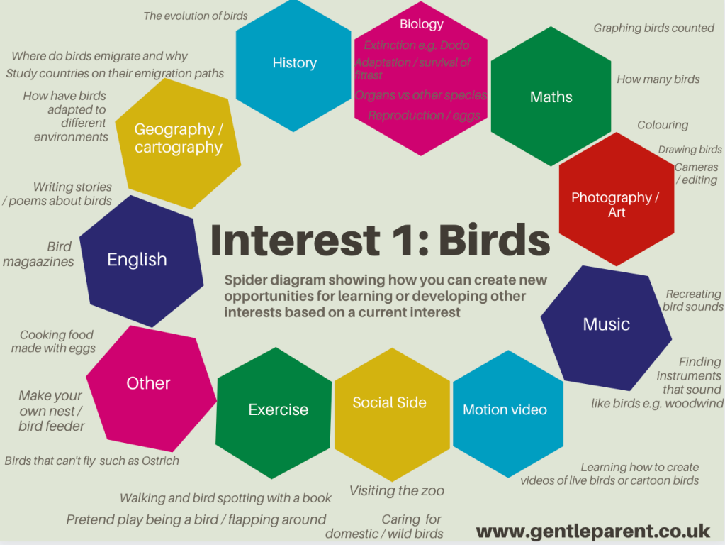 Spider Diagram for Learning Opportunities Around Interest in Birds